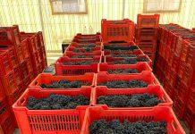 Miac mercato uve cuneo